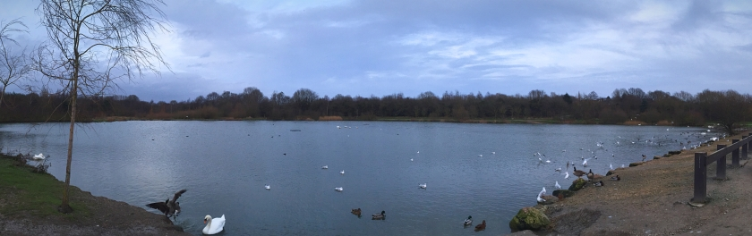 Swan Lake Pano